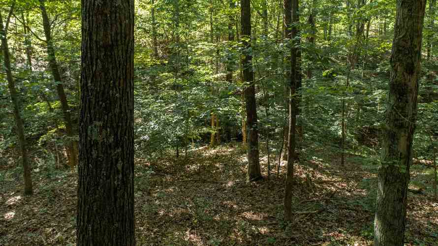 S State Road 446 S Bloomington, IN 47401   MLS 201935545   photo 10