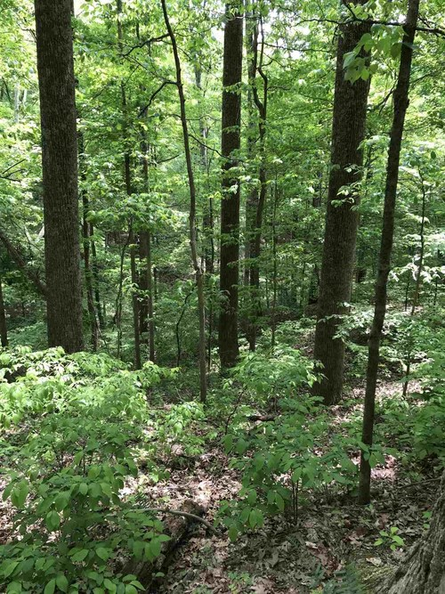 S State Road 446 S Bloomington, IN 47401   MLS 201935545   photo 17