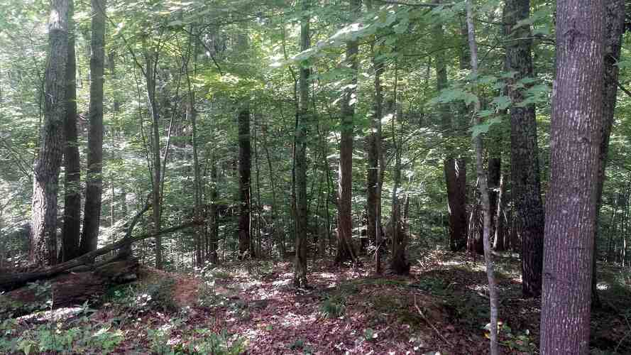 S State Road 446 S Bloomington, IN 47401   MLS 201935545   photo 19