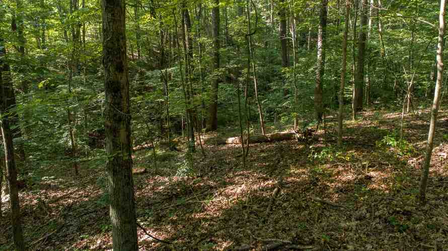 S State Road 446 S Bloomington, IN 47401   MLS 201935545   photo 9