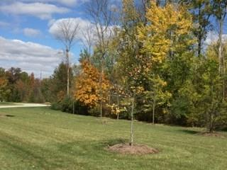 6390 MONTANA SPRINGS Drive Zionsville, IN 46077   MLS 21571161   photo 6